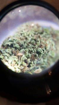 distributore cannabis h24 catania