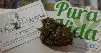 vendita cannabis catania