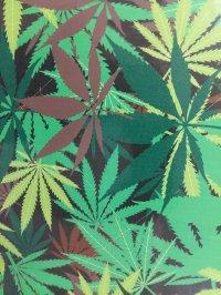 marijuana catania